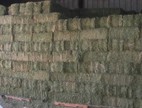 Alfalfa and feed Wheat Oat Hay